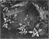 "Ansel Adams ""Leaves, Mills College, Oakland, California"""