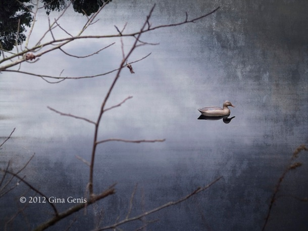Lone duck on a pond along the Cape Fear River Trail