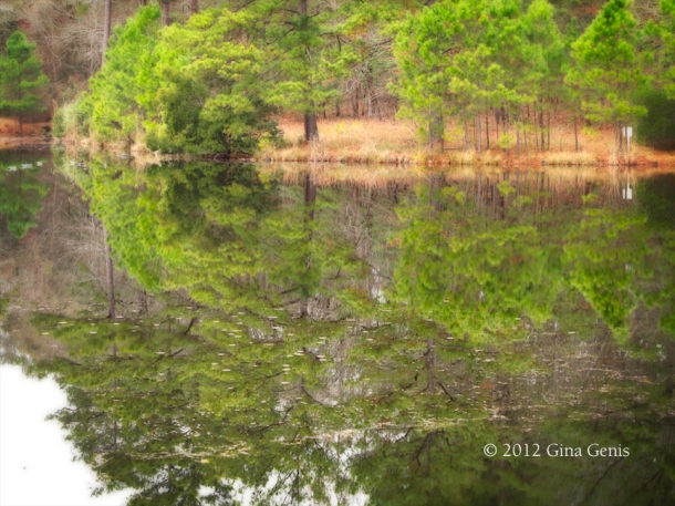 A pond along the Cape Fear River Trail