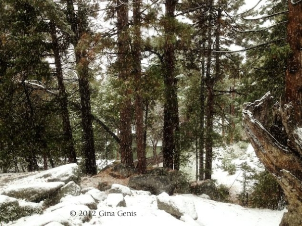 Snow begins to fall in Idyllwild.